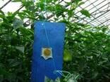 Голубые клеевые ловушки-карты 25х40см - фото 2