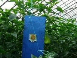 Голубые липкие ловушки 25см*10см - фото 2