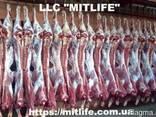 Говядина Телятина Мясо Халяль оптом Украина - фото 2