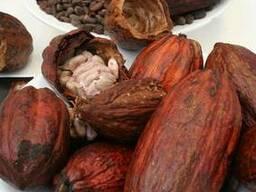Какао порошок алкализированный GP-690-11 - photo 3