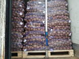 Картофель белорусский - фото 2