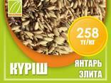 Оптом семена рис, люцерны и пшеницы - фото 1