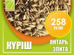 Оптом семена рис, люцерны и пшеницы
