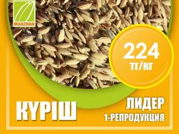 Оптом семена рис, люцерны и пшеницы - photo 7