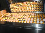 Продажа яйц и соли - фото 5