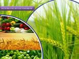 Производитель и поставщик пестицидов по всему миру - photo 1