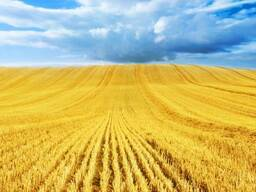 Пшеница 3 класса поставка на FOB Астрахань