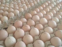 ROSS-308 yumurta inkubasiya, istehsalçıdan