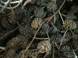 Шишки ольховые, ольха соплодия, ольха, шишки ольхи - photo 3