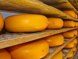 Сыр и сырные продукты