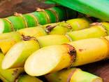 Тростниковый Сахар (Бразилия) - photo 2
