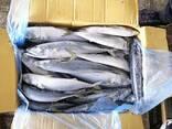 We are supplying in bulk fresh Mackarel fish , Hack fish , Tilapia , cat fish, pangasuis, - photo 1