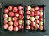Яблока, виноград - фото 1