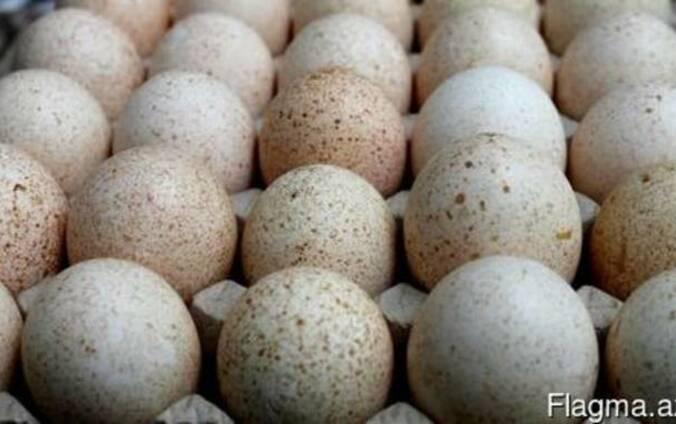 Яйцо инкубационное. Экспорт из Харькова.
