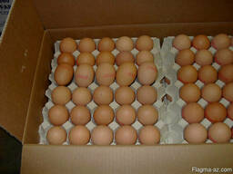 Яйцо столовое халяль