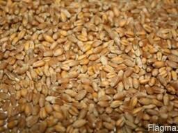 Зерновые культуры на условиях FOB Odessa