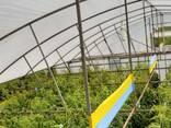 Желто-голубые клеевые рулонные ловушки 30смх100м - фото 1