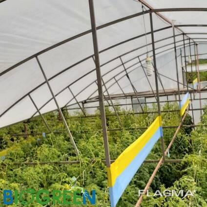 Желто-голубые клеевые рулонные ловушки 30смх100м