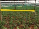 Желтые клеевые рулонные ловушки 15смх100м - фото 4